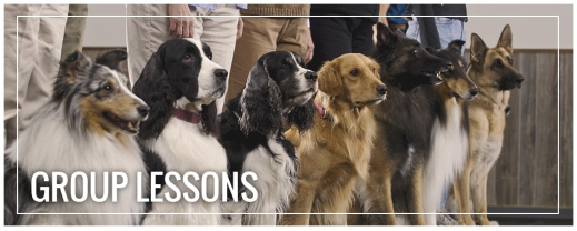Building Human/Canine Relationships (Obedience Class) – Body