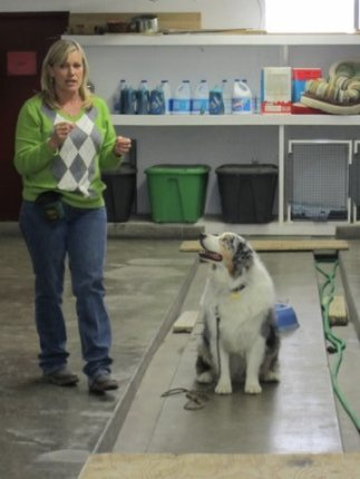 teaching obedience class